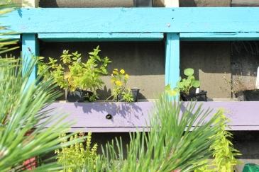 SCC planters